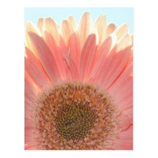 Peaches and Cream Postcards