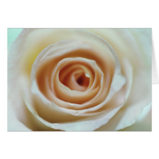 Peachy Cream Rose Notecard Note Card
