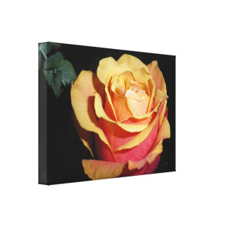 Peachy Red Rose Canvas Print