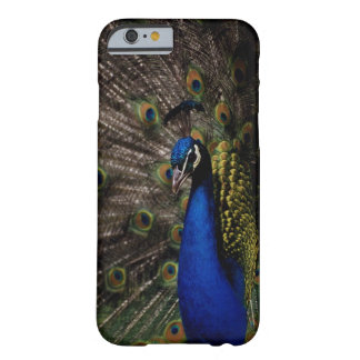 Peacock 2 barely there iPhone 6 case