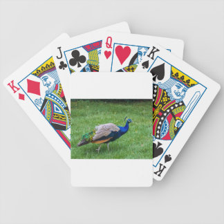 Peacock 2 bicycle playing cards