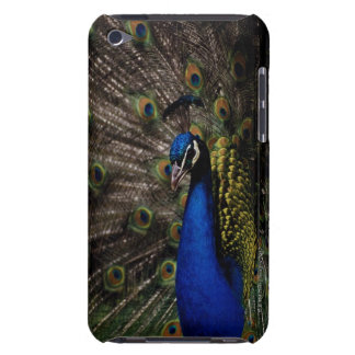 Peacock 2 iPod touch cases