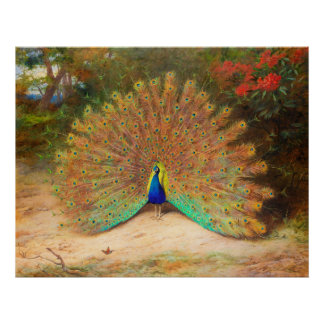 Peacock and Peacock Butterfly Poster