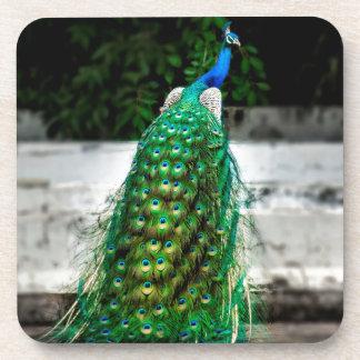 peacock beautiful feather art colours coaster