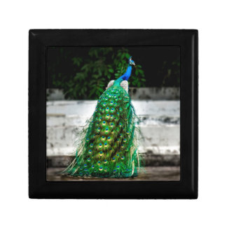 peacock beautiful feather art colours gift box