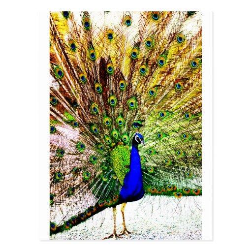Peacock Beautiful Green Bird Animal Royal Luxury S Postcards