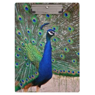 Peacock bird display clipboard