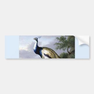 Peacock Bird Family Painting Bumper Sticker