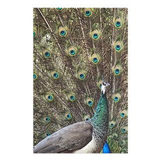 Peacock Bird Wildlife Animal Feathers Stationery Paper