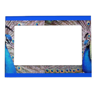 Peacock Birds Magnetic Frame