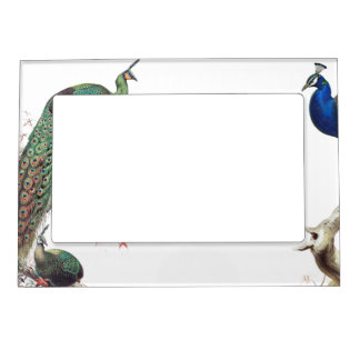Peacock Birds Wildlife Animals Magnetic Frame