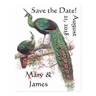 Peacock Birds Wildlife Animals Save the Date Postcard