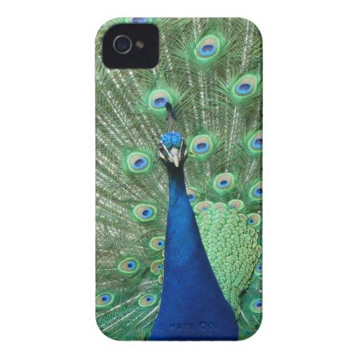 Peacock BlackBerry Bold Cover