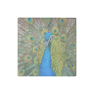 Peacock Blue Head with and Colorful Tail Feathers Stone Magnet