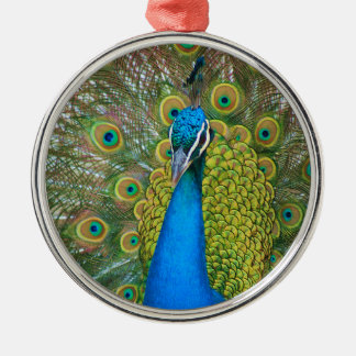 Peacock Blue Head with and Colourful Tail Feathers Silver-Colored Round Decoration