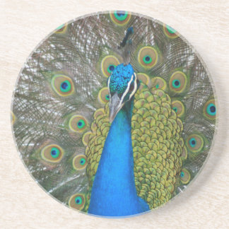 Peacock Blue Head with and Tail Feathers Coaster