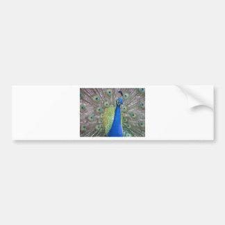 Peacock Car Bumper Sticker