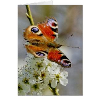 Peacock Butterfly - Butterfly On Hawthorn Flower - Card