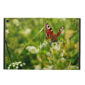 Peacock Butterfly In Green Summer Meadow