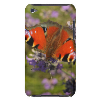 peacock butterfly iPod touch cases