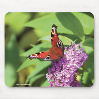 Peacock Butterfly on Buddleia Photo Mouse Pad
