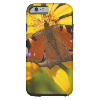 Peacock butterfly tough iPhone 6 case