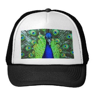 Peacock Cap