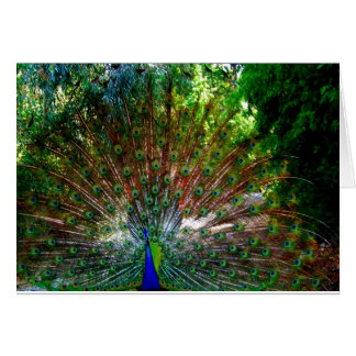 Peacock_ Card_by Elenne Boothe Card