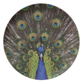 Peacock Dinner Plates