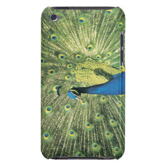 Peacock displaying iPod touch case