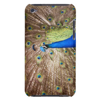 Peacock displaying plumage barely there iPod cover