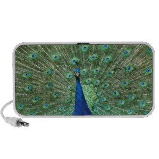 Peacock Doodle Speaker