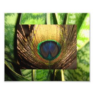 Peacock Eye Art Photo