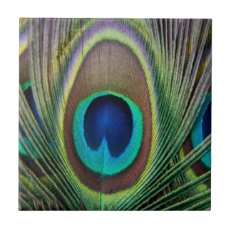 Peacock feather ceramic tile