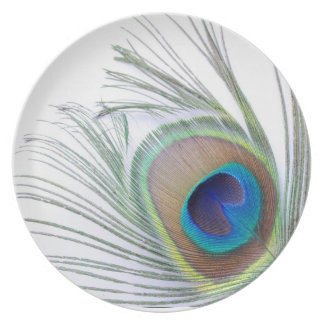 Peacock Feather Dinner Plate