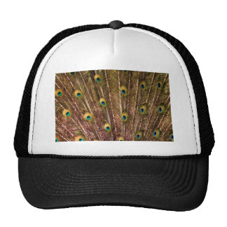 Peacock Feather Pattern Cap