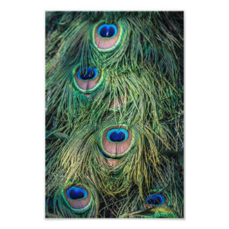 Peacock Feather Pattern Photographic Print
