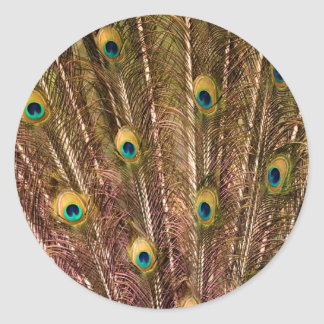 Peacock Feather Pattern Round Sticker