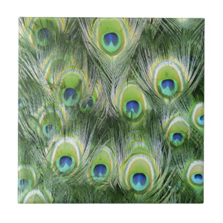 Peacock Feather Pattern Tile