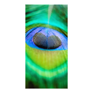 Peacock Feather Picture Card