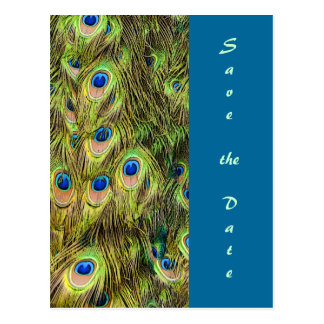 Peacock Feather Save the Date Card Postcard