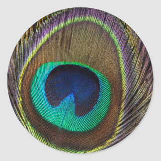 Peacock Feather Upright Close-Up Classic Round Sticker