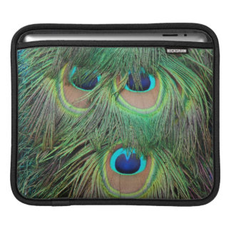 Peacock Feathers 3 Sleeve For iPads