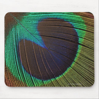 Peacock feathers 3 mouse pad