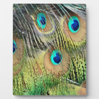 Peacock Feathers Eyes All New Growth Photo Plaque