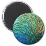 Peacock Feathers I Colourful Abstract Nature 6 Cm Round Magnet