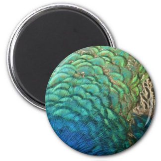 Peacock Feathers I Colourful Abstract Nature Magnet