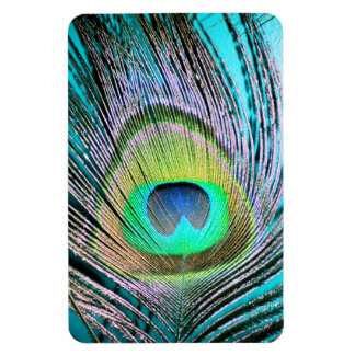 Peacock Feathers on turquoise Magnet
