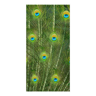 Peacock feathers personalised photo card