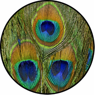 Peacock Feathers Photo Sculpture